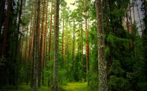 in-the-forest-2-wide.jpg