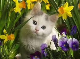 kitten n flowers