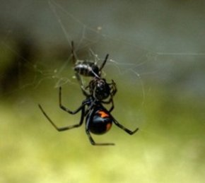 3 Dangerous Spiders You Need to Keep Your Pets Away From