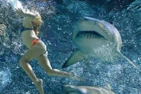 Shark Attack Victim Loses ValiantFight